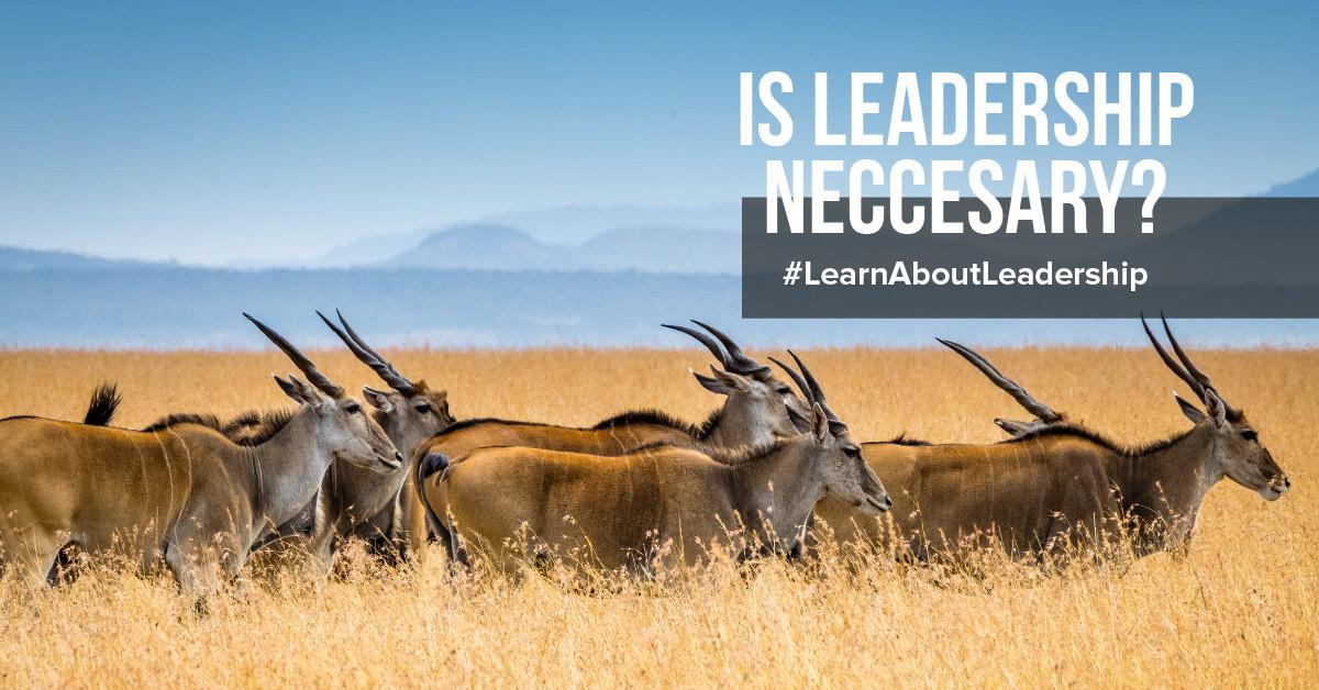 ¿Cómo ser un buen líder?