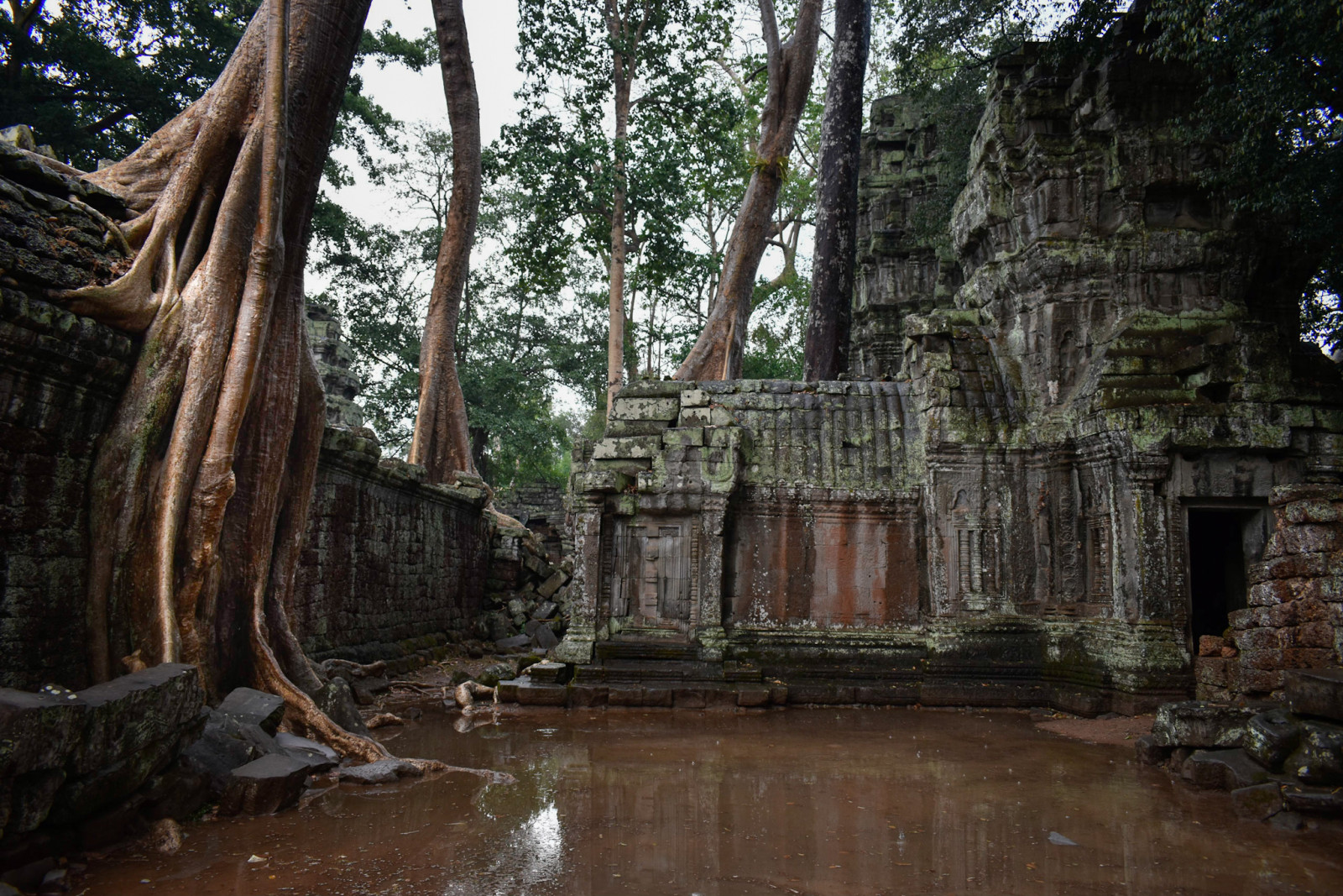 Cambodia photo tours Angkor Wat-ta prohm temple