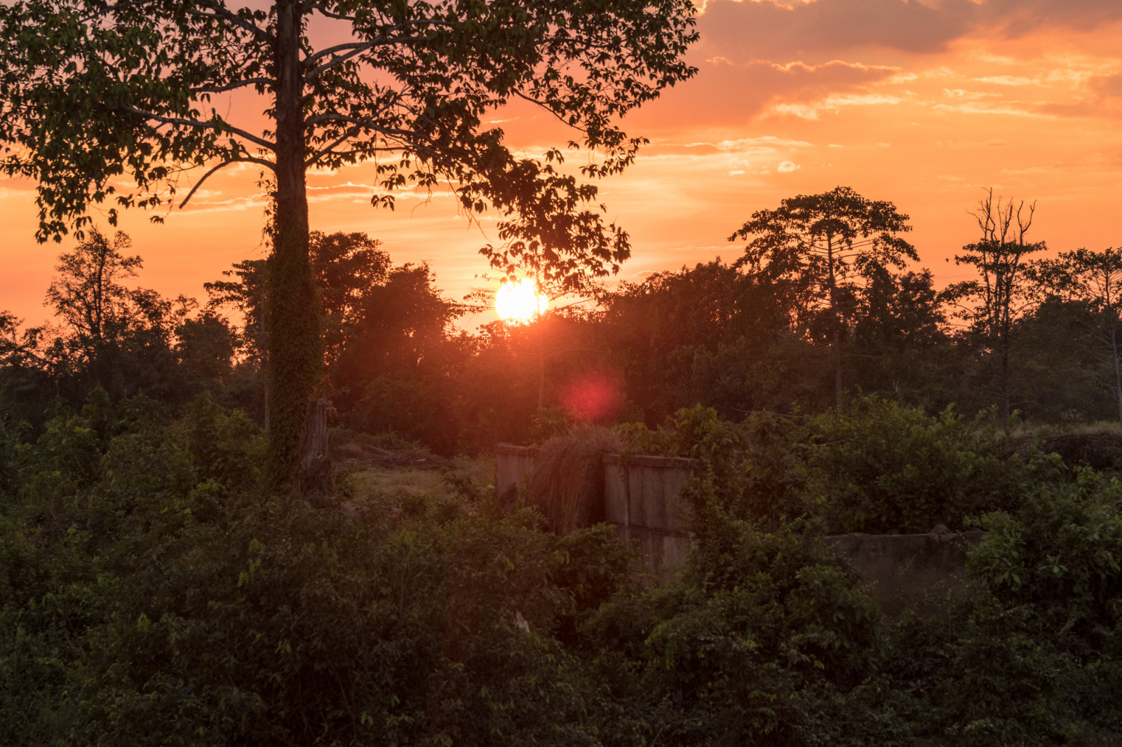 Cambodia photo tours jungle photography sunset