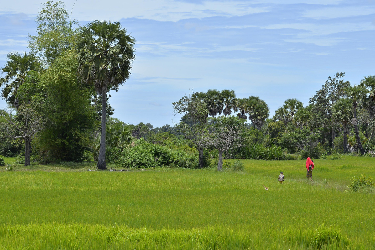 Cambodia photo tours landscape rice field