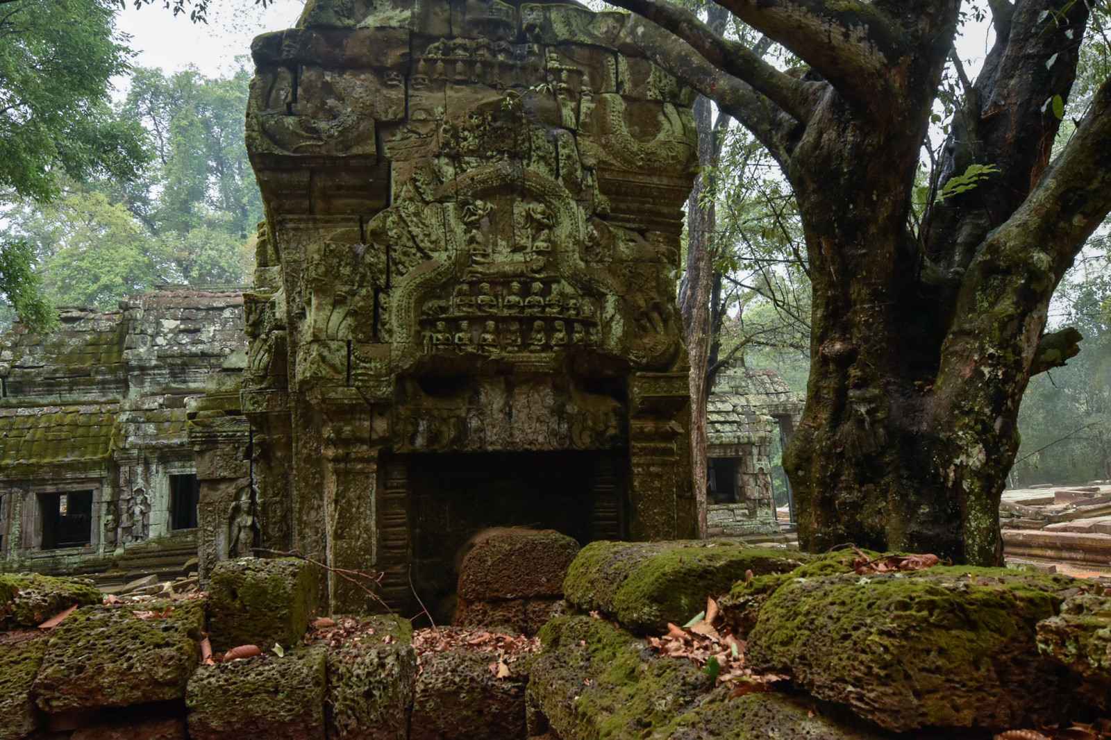 Cambodia photo tours ta prohm temple 1
