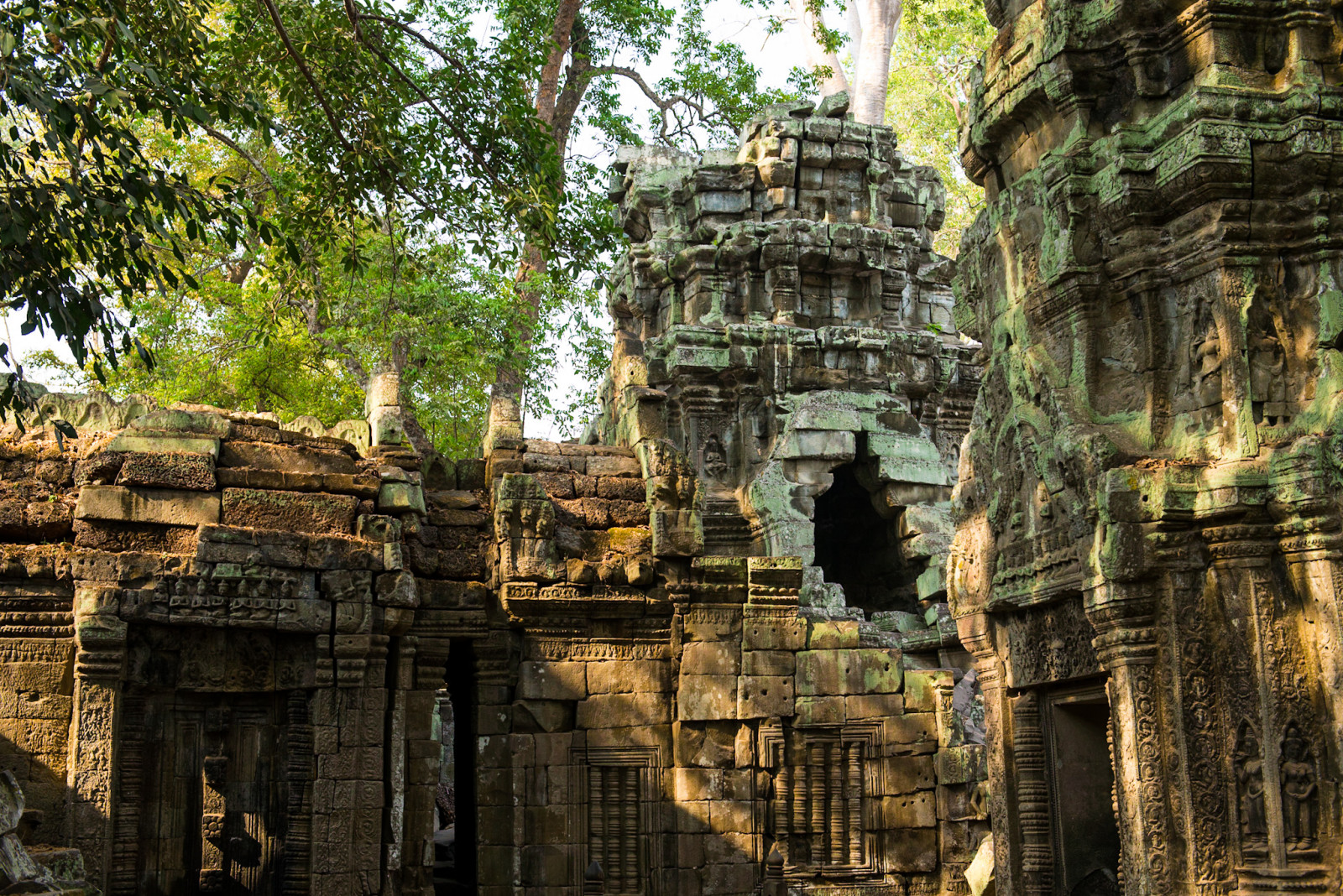Cambodia photo tours ta prohm temple