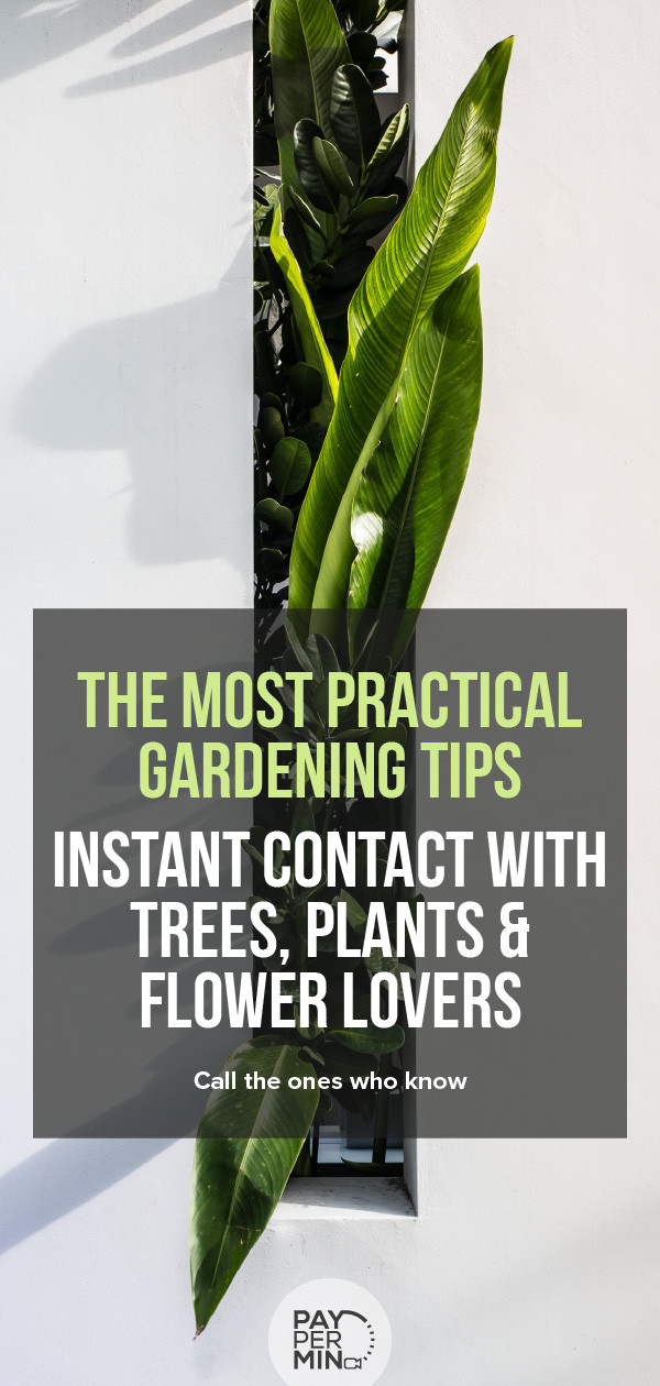 Tips & tricks from gardeners