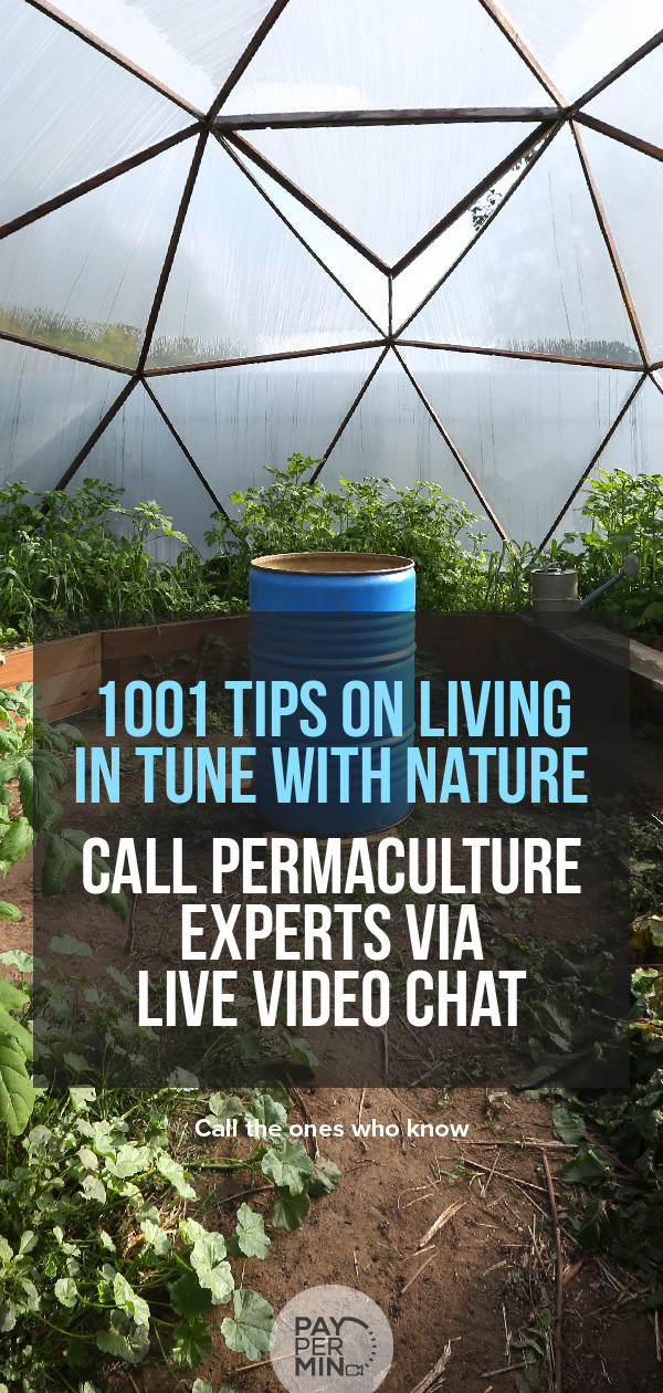 Permaculture principles and gardening